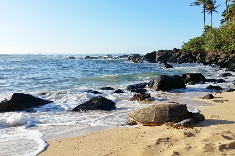 Laniakea Beach To See Turtles On Oahu